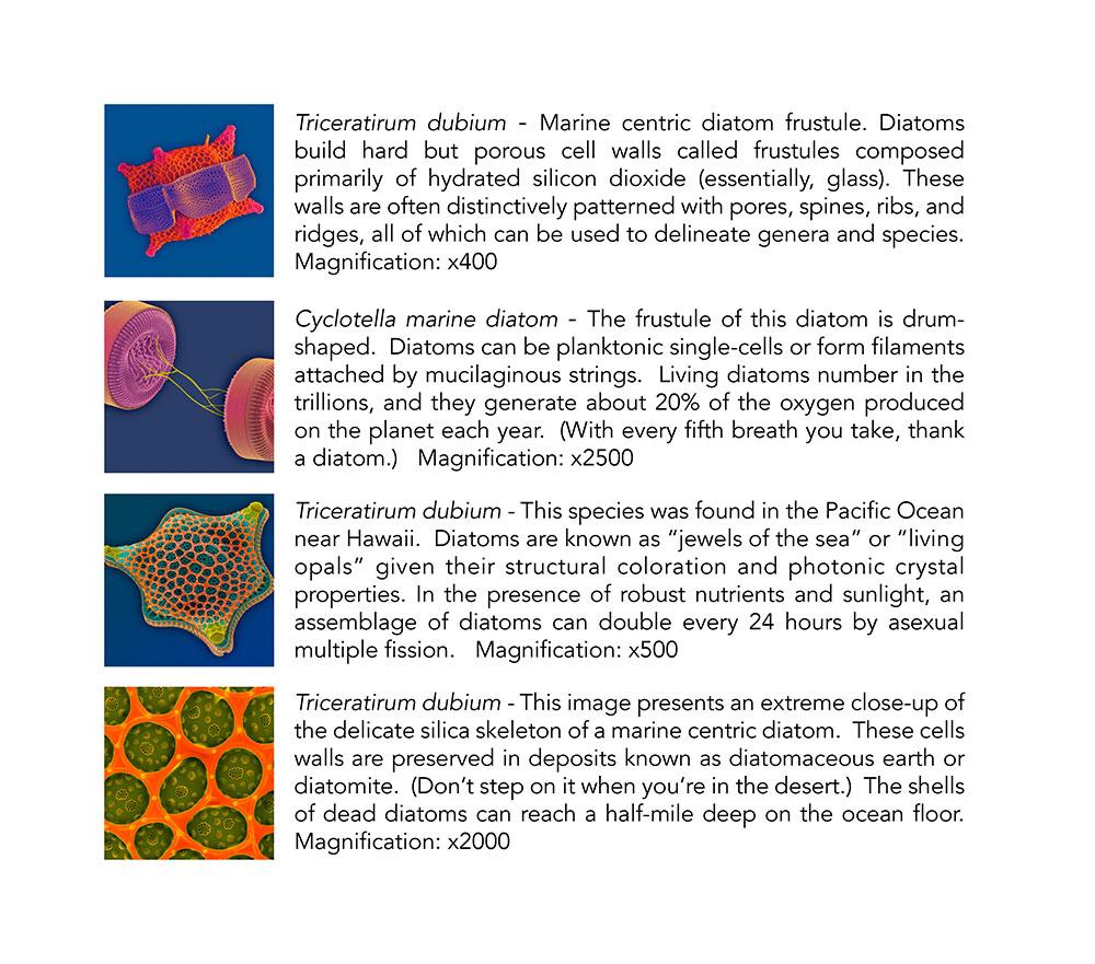 Diatom Ribbons